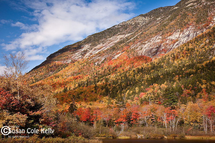 Fall foliage on Mt Webster, Crawford Notch State Park, White Mountains, NH