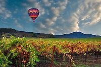 Hot air balloons over fall colored vineyards. Napa Valley, California