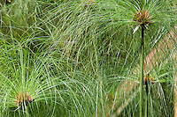 A close up of dense stalks and grasses.