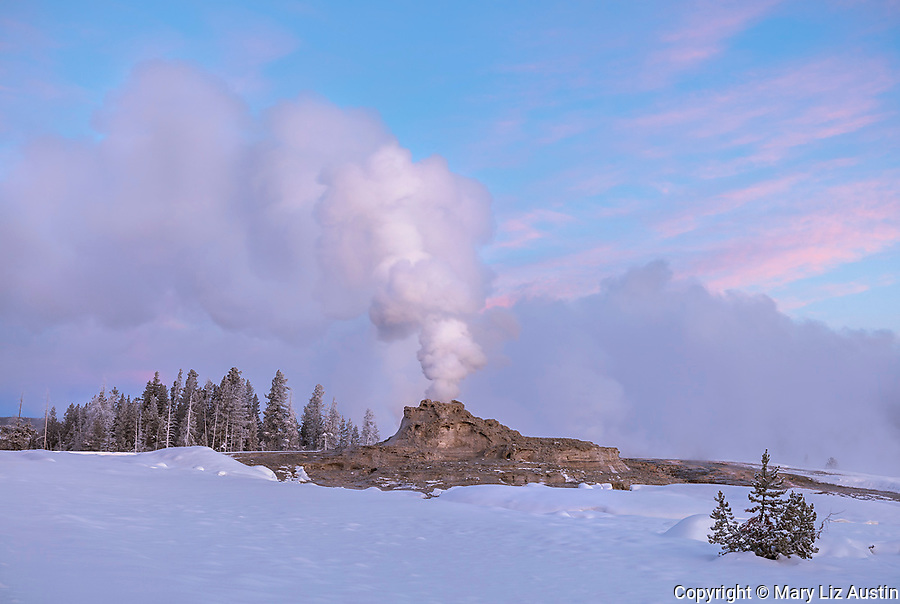 Yellowstone National Park, WY: Steam venting from Castle Geyser in the Upper Geyser Basin at dawn in winter