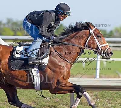 Palm Meadows Training Center 2-13-12