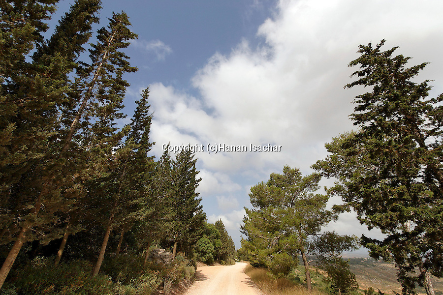 Israel, the Lower Galilee. Achihood forest scenic road