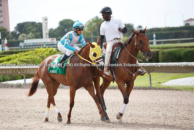 Citizen Advocate on post parade for The Azalea Stakes (G3), Calder Race Course, Miami Gardens Florida. 07-07-2012.  Arron Haggart/Eclipse Sportswire.