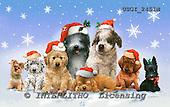 GIORDANO, CHRISTMAS ANIMALS, WEIHNACHTEN TIERE, NAVIDAD ANIMALES, paintings+++++,USGI2451M,#XA# dogs,puppies