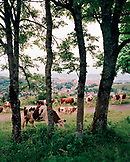 FRANCE, Pontarlier, cows in pasture on a hillside about the town of Pontarlier, Jura Wine Region