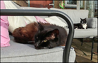 BNPS.co.uk (01202 558833)<br /> Pic: CarolineSibley/BNPS<br /> <br /> Santa paws...Britains oldest rescue cat gets new home for Xmas.<br /> <br /> An abandoned pet thought to be the world's oldest ever rescue cat has been successfully re-homed. <br /> <br /> Banjo was dumped at a cattery last month and staff were stunned to find he had been fitted with a microchip which indicated he was 27 years old - or 125 in human years.<br /> <br /> It is believed this makes the black and white puss among the oldest felines in the UK, and the RSPCA are now in touch with the Guinness World Records to confirm he is also the world's most elderly rescue cat.