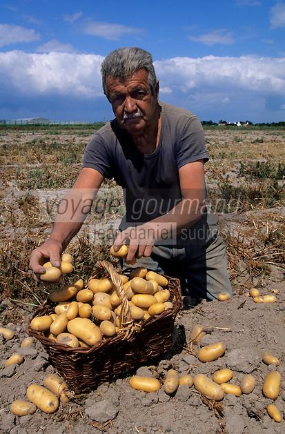 Europe/France/Pays de la Loire/85/Vendée/Ile de Noirmoutier: La récolte des pommes de terre