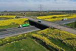 Foto: VidiPhoto<br /> <br /> DODEWAARD – Het eerste gele viaduct van Nederland... Niet alleen op het Malieveld ontmoeten bouw en agrarische sector elkaar. Ook langs de A15 bij Dodewaard gebeurt dat, zij het op een totaal andere wijze. Het viaduct over de snelweg en de bermen langs de rijksweg zijn volledig begroeid met Herik (Sinapis arvensis), die donderdag in volle bloei staat. Het lijkt daarom alsof het (vracht)verkeer een felgele bloementunnel inraast. Herik, dat als twee druppels water op koolzaad lijkt, wordt veel gebruikt in akkerranden en langs boomgaarden. De gele bloesem bevordert de biodiversiteit en trekt (wilde) bijen, hommels en vlinders aan en zorgt zo voor bestuiving van de fruitbomen. Vooral op de Betuwse klei onwikkelt Herik zich goed en keert daarom ieder jaar weer terug. De bladeren van de planten worden vóór de bloei ook gebruikt om salades op smaak te brengen.