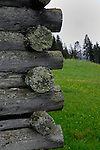 Lichen growing on wooden poles. Support poles on the side of wooden structured cattle shelter. Imst district, Tyrol, Austria.The Alps