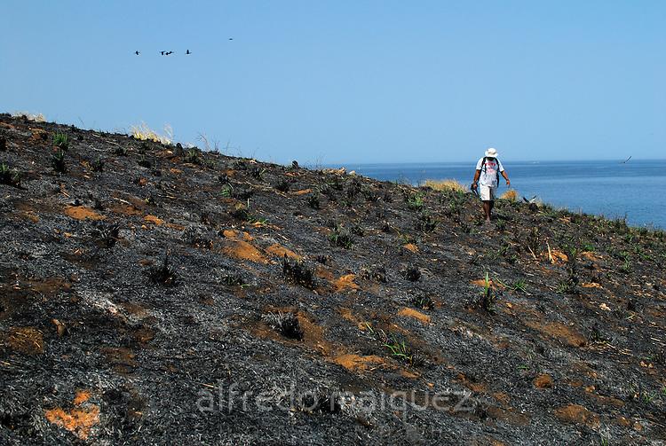Man walking on burned soil at Pachequilla island. Las Perlas Archipelago, Panama province, Panama, Central America.