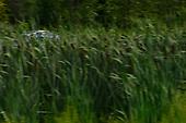 IMSA WeatherTech SportsCar Championship<br /> Northeast Grand Prix<br /> Lime Rock Park, Lakeville, CT USA<br /> Saturday 22 July 2017<br /> 86, Acura, Acura NSX, GTD, Oswaldo Negri Jr., Jeff Segal<br /> World Copyright: Gavin Baker<br /> LAT Images