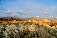Surrounding brush and vegetation around Mono Lake with tufa and Sierras in the distance