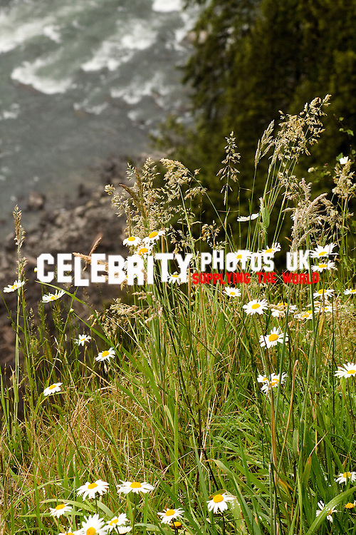 photos from Snoqualmie Falls,Bellevue, and Seattle, Washington by Catherine Brown