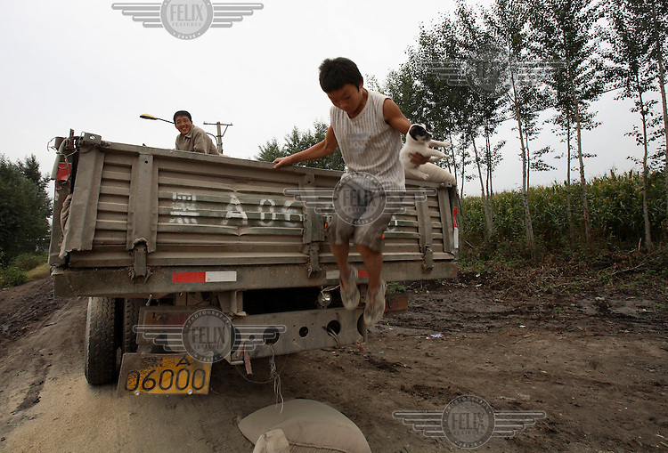 A young teenage farm boy jumps from a truck with a small puppy in his arms.