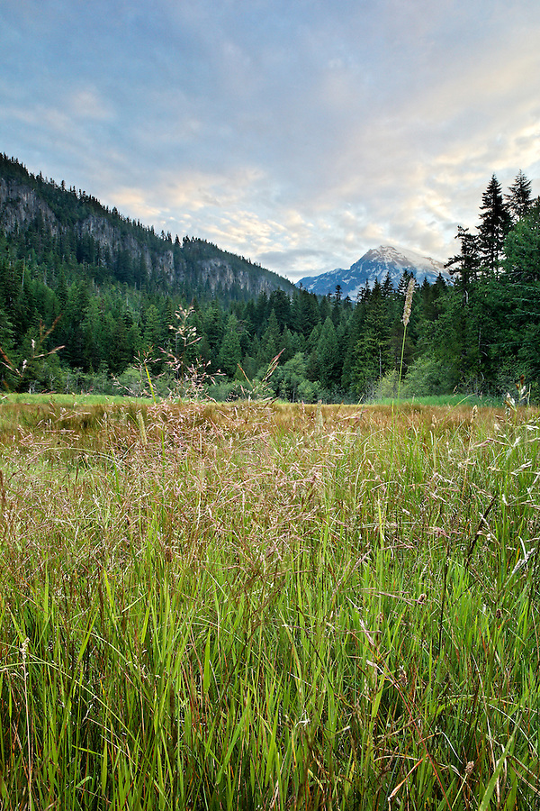Longmire meadows below Mount Rainier, Mount Rainier National Park, Washington, USA