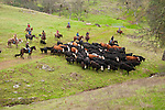 "Gathering the cattle for marking and branding with the Dell""Orto family in the Sierra Nevada Foothills of California...**usage by any anti-livestock individual, group, publication, websites, e-mail or anything similar is prohibited."