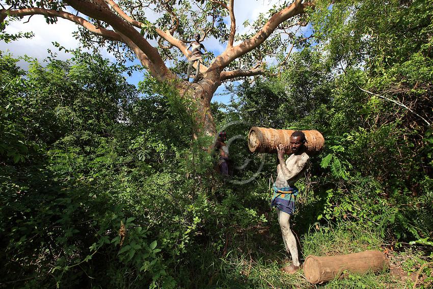 In the land of the Bana tribe, every family has beehives. The young have about a dozen and the elders up to 60 or 80. The hives are set up at the start of the season, before the swarming, so that they fill up with bees naturally.///Dans le pays de la tribu Bana, chaque famille possède des ruches. Les jeunes en ont une dizaine et les anciens jusqu'à 60, 80. La pose des ruches se passe en début de saison avant l'essaimage pour qu'elles se remplissent d'abeilles naturellement.
