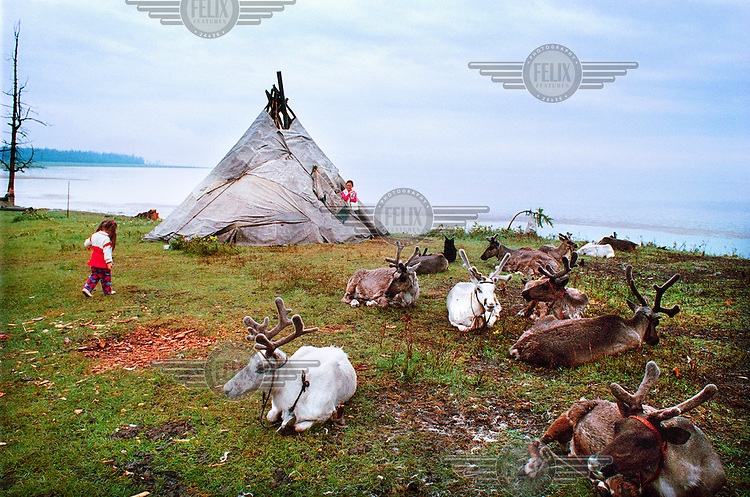 The tent of a Tsaatan family, who live with their 30 reindeer near Khovsgol Lake. They made the decision to live in Khovsgol National Park, 300km from their homeland, to make an income from tourism. Mongolians and foreigners come to see the reindeer being milked and pose for pictures..The Tsaatan are a nomadic people from a remote area, Tsaagaan Nuur, near the border with Siberia. The community is diminishing, with only 30 families and 300 reindeer left. With the closure of the border between Mongolia and Siberia the nomadic life became more difficult.