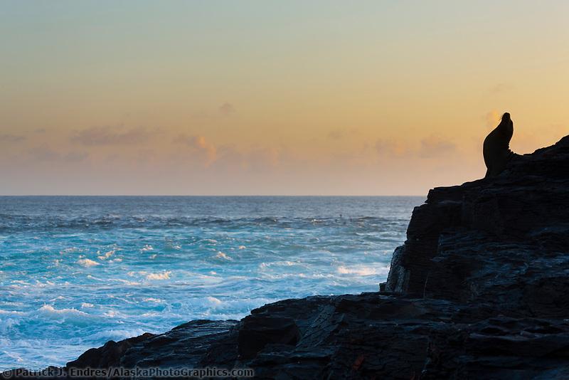 Galapagos sea lion, Punta Suarez, Espanola Island, Galapagos Islands, Ecuador