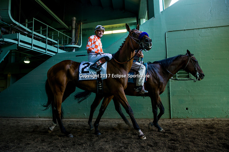 ARCADIA, CA - MAY 27: American Freedom before the Gold Cup at Santa Anita Park  on May 27, 2017 in Arcadia, California. (Photo by Alex Evers/Eclipse Sportswire/Getty Images)