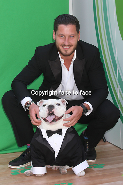 "Val Chmerkovskiy from ""Dancing with the Stars"" and his English Bulldog, Sir Sleep attend Procter & Gamble's ""Everyday Effect"" campaign with Loving Home hosted by Iams at Riverside Park's 72nd St. Dog Run in New York, 19.06.2013. Credit: Rolf Mueller/face to face"