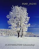 Marek, CHRISTMAS LANDSCAPES, WEIHNACHTEN WINTERLANDSCHAFTEN, NAVIDAD PAISAJES DE INVIERNO, photos+++++,PLMPST245,#xl#