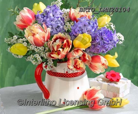 Alfredo, FLOWERS, BLUMEN, FLORES, photos+++++,BRTOLMN28104,#f#, EVERYDAY