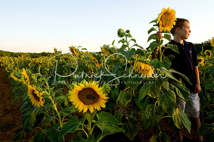 A young boy looks around the expansive sunflower fields located within the Draper Tracts Wildlife Management Area in Brattonsville, SC. Model released.