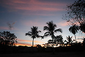Aldeia Baú, Para State, Brazil. Palm trees silhouetted against the sunset.