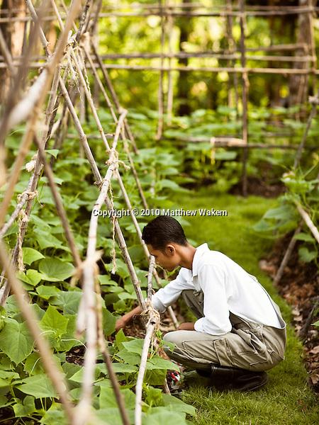 A gardener tends to the vegetable garden at Six Senses Hideaway Yao Noi. Thailand.