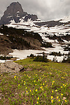 Glacier lilies fill a small field beneath a mountain during a small rain squall in Glacier National Park, Montana.