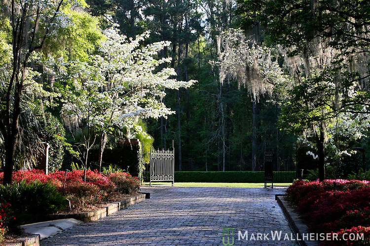 Dogwoods in bloom at the Alfred B.Maclay Gardens State Park in Tallahassee, Florida March 22, 2007.  (Mark Wallheiser/TallahasseeStock.com)