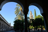 SPAIN, Cordoba, Mezquita, mosque and cathedral, bell tower and court garden with palm and orange trees