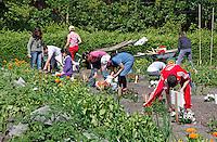 Kinderen werken in een moestuin