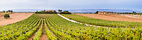 Panoramic photo of a vineyard at a winery near Noto in South East Sicily, Italy, Europe. This is a panoramic photo of a vineyard at a winery near Noto in South East Sicily, Italy, Europe.