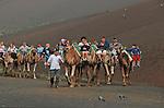 La promenade en chameau reste une des grandes attractions touristique du parc de Timanfaya. Lanzarote..