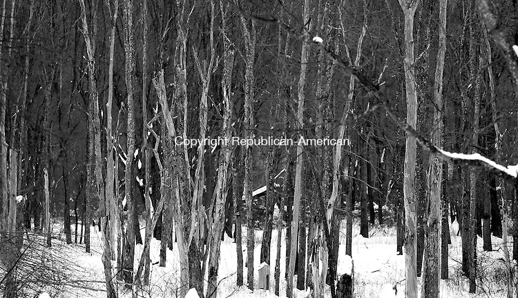 Middlebury, CT- 15, January 2010-011511CM03 FOR COUNTRY LIFE USE ONLY PLEASE  The forrest in black and white at Hop Brook in Middlebury.   Christopher Massa Republican-American