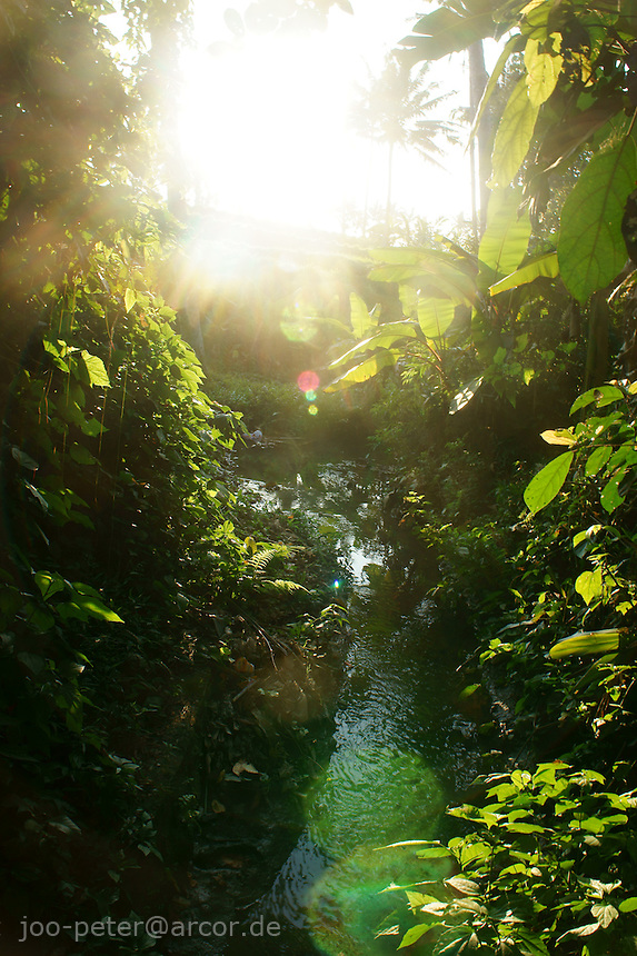 nature scene with spring, fresh green trees of jungle and sunlight, central Bali, archipelago Indonesia