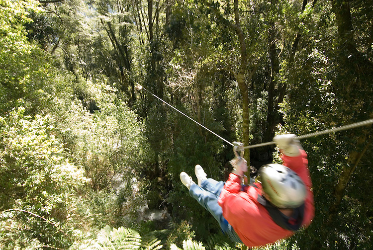 Chile, Lake Country: Canopying or ziplining adventure sport on a steel line through the canopy of the trees near Peulla..Photo #: ch620-33468..Photo copyright Lee Foster www.fostertravel.com, lee@fostertravel.com, 510-549-2202.