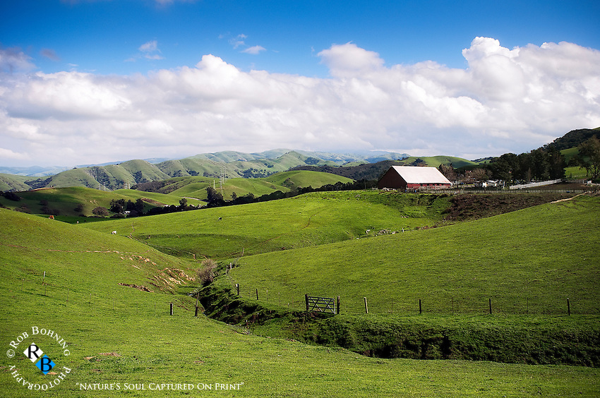 Farm in the lush hills of the East Bay outside of Livermore