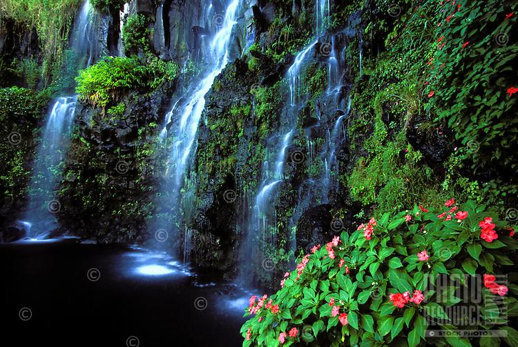Impatien flowers grow near a Hana, Maui waterfall.