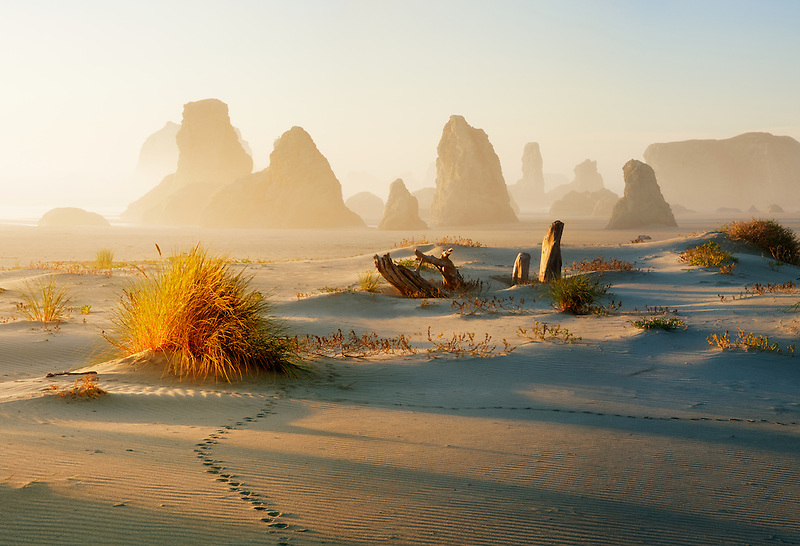 Sea stacks and animal tracks at Bandon Beach and sun rays. Oregon