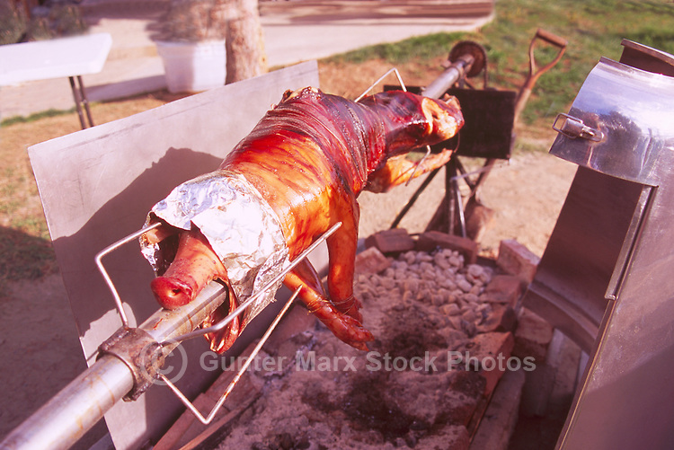Pig Roast - Hog skewered on a Rotisserie Spit and rotating and roasting over an Open Fire Pit