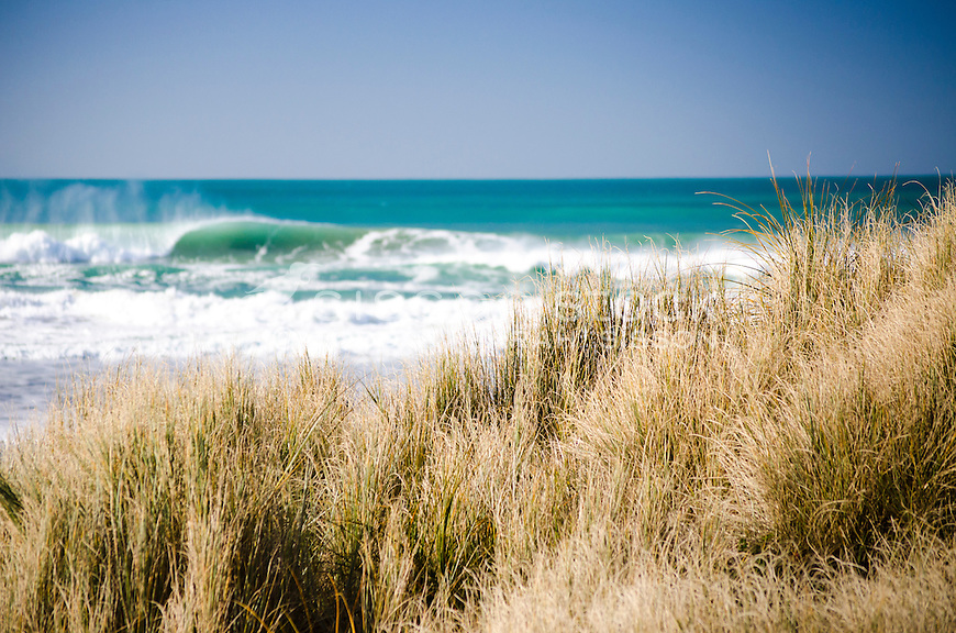 Large wave breaking with marram grass in foreground. Gisborne North Island New Zealand.