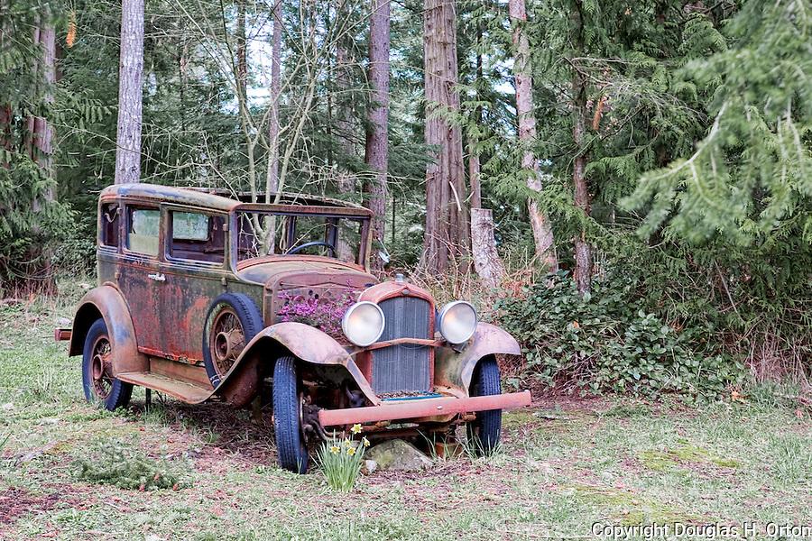 Antique car, yard ornament, Three Lakes Road, display,  Road on San Juan Island, near the town of Friday Harbor.  San Juan Islands group, Salish Sea, Washington State, USA