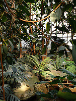 Tropical Rainforest Glasshouse (formerly Le Jardin d'Hiver or Winter Gardens), 1936, René Berger, Jardin des Plantes, Museum National d'Histoire Naturelle, Paris, France. View from the ground of the luxuriant Tropical vegetation at the bottom of the cave around the pool.