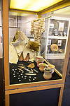 Display case of neolithic items inside the museum at Bruton, Somerset, England, UK