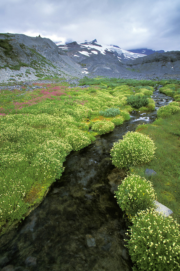 Alpine stream flowing through wildflower meadow, Paradise, Mount Rainier National Park, Washington