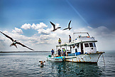 GALAPAGOS ISLANDS, ECUADOR, Isabela Island, frigate birds fly around a fishing boat near Elisabeth Bay