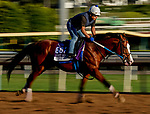 October 26, 2019 : Breeders' Cup Mile entrant Snapper Sinclair, trained by Steven M. Asmussen, exercises in preparation for the Breeders' Cup World Championships at Santa Anita Park in Arcadia, California on October 26, 2019. Scott Serio/Eclipse Sportswire/Breeders' Cup/CSM